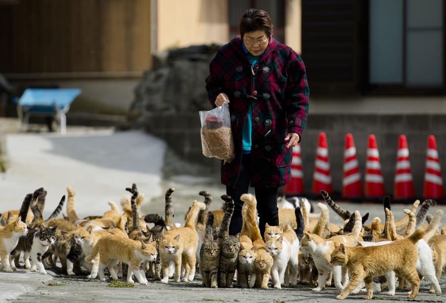 Pani na obrazku jest turystką. Masy ludzi przetaczają się przez Aoshimę. Przybyli, by doznać zaszczytu karmienia kotów. Koty łaskawie go udzielają.