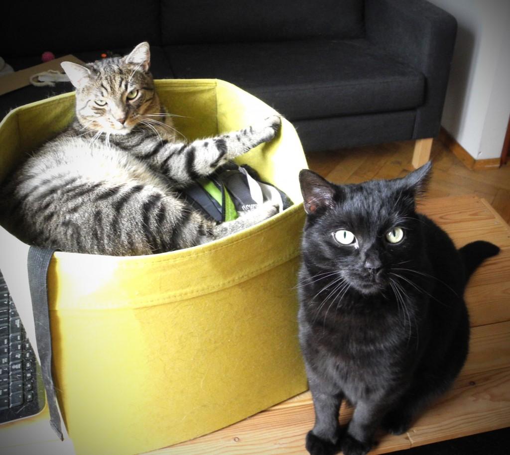"""Post przerywany będzie zdjęciami kotów (courtesy of Godryk.)  Karmel oraz Parmezan zapodają do kamery serdeczne """"Czego?"""""""