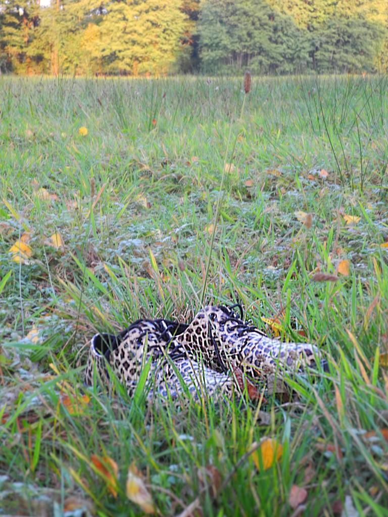 Lamparty w trawie.
