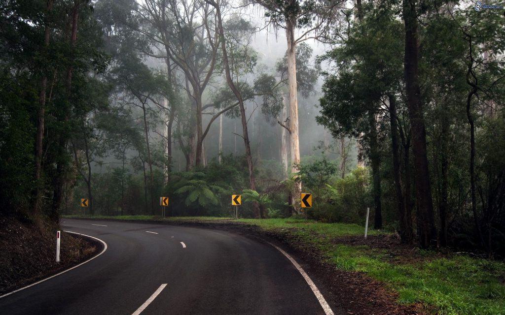 road-curve,-road,-forest,-jungle-160624