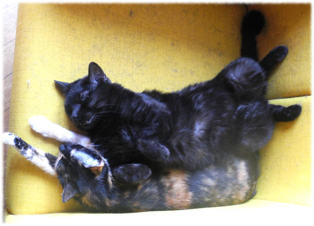 Tu z Parmezanem. Koty to takie pełne gracji zwierzęta.
